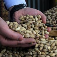 South Africa High quality pistachios nuts for sale