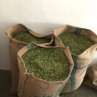 Green Cardamon | Fresh - Organic | Best Price