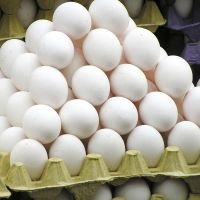 Eggs & Egg Products/Meat & Poultry/ Feed