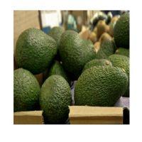 Hass Avocado/Dried