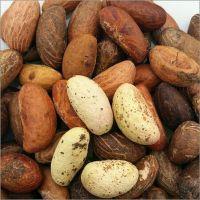 Fresh Bitter Kolar Nuts