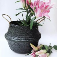 Black Round Seagrass Belly Basket with Handles, Eco friendly Woven Storage Basket