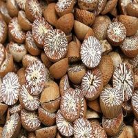 Dried Betel Nut High Quality Big size
