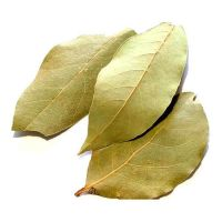 Best Quality Bay Leaf