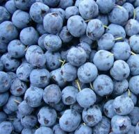 Best Price Fresh Blueberry