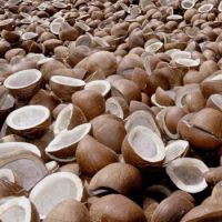Good Quality Coconut Copra / whole dried coconut