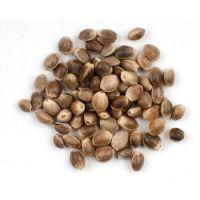 Best Quality Hemp Seeds