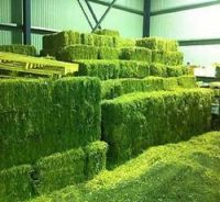 Alfafa Hay for Animal Feeding Stuff Alfalfa,hay/alfalfa hay pellets