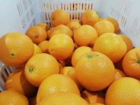 Fresh Valencia Oranges-Fresh Citrus Fruits