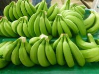 Green Cavendish Bananas