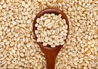 High Quality BARLEY