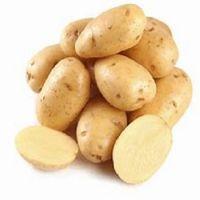 Freshly Harvested Potato / Holland Fresh Potato Seed/Seeds