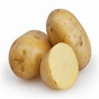 Freshly Harvested Potato / Holland Fresh Potato Seed/Seeds