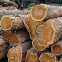 Timber Logs, Hard/Soft Wood.