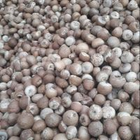 Grade A Betel Nuts