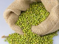 Best quality Mung beans