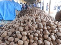 Good Quality Coconut Copra / Whole Dried Coconut Good Price