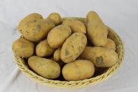 Good Quality Very Fresh Organic Potato Supplier