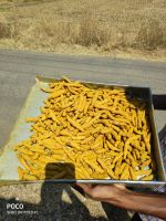 Best Natural Dry and Raw Turmeric finger