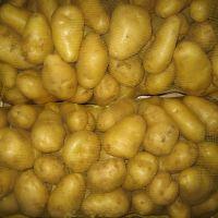 Export Quality Mozika Potato
