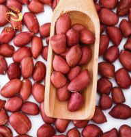 Hot Sale High Protein Red Skin Peanuts