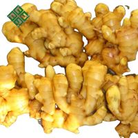 Hot Sale Organic Fresh Ginger