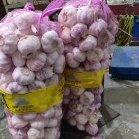 Distributor Wholesale Fresh Pure White Garlic