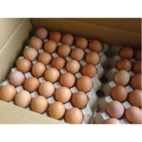 Chicken Table Eggs