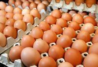 Brown And White Farm Fresh Chicken Eggs