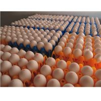 FRESH CHICKEN TABLE EGGS FOR EXPORT