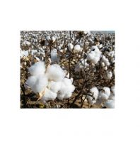 High Quality Bulk Raw Cotton