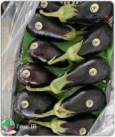 Top Iranian Eggplant (Long eggplant, Round eggplant, Baby eggplant)