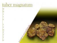 white truffle tuber magnatum