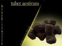 black truffle tuber aestivum