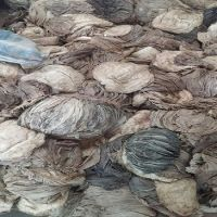 Dry / Salted Beef Omasum from Pakistan/ Buy Beef Omasum / Omasum Suppliers & Exporter
