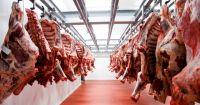 Good Quality Frozen Beef Parts Halal Cow Meat Suppliers Wholesales