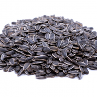 Best Quality Organic Sunflower Seed Kernels at Wholesale Price