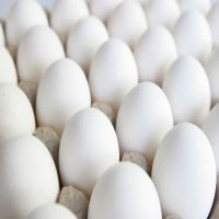 Fresh Poultry Eggs (White / Brown) Affordable