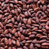 Natural Cacao Powder, Cacao Beans, Cacao Nibs, Cacao Butter High Grade
