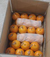 Fresh Kinnow / Mandarin