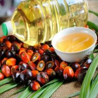 crude palm kernel oil for
