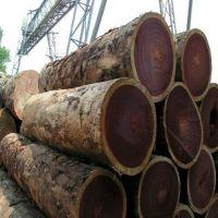 Padouk wood