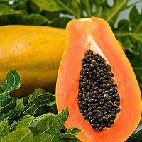 Fresh Papaya  Organic