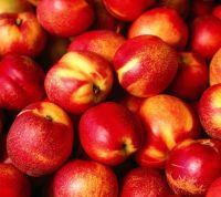 Fresh Nectarine Fruits/Fresh Fruits/Nectarines!