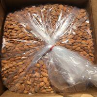 Organic Apricot Kernel Agriculture Nuts & Kernels Apricot Kernels
