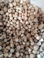 High Quality Betel Nut Dried Whole (80-85%) from Indonesia