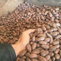 Cocoa Beans Ariba Cacao beans Dried Raw Cacao Fermented Cocoa Beans