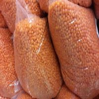 Bulk Green And Red Quality Lentils for sale