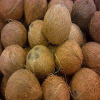 Pure Quality Semi Husked Fresh Coconut (Grade A)