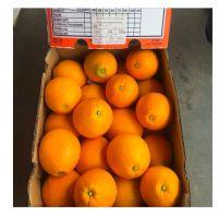 Fresh Citrus Fruit/ Fresh Navel Oranges for sale